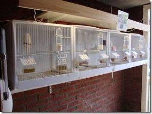 broedkooi vogelpension 2