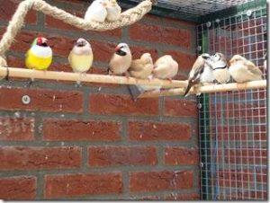 broedkooi vogelpension 5