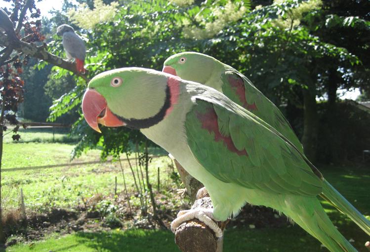 Vogels (1)